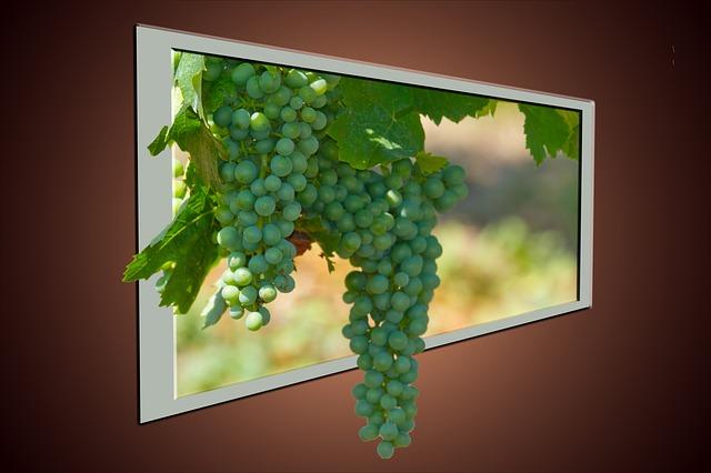 wine-525218_640