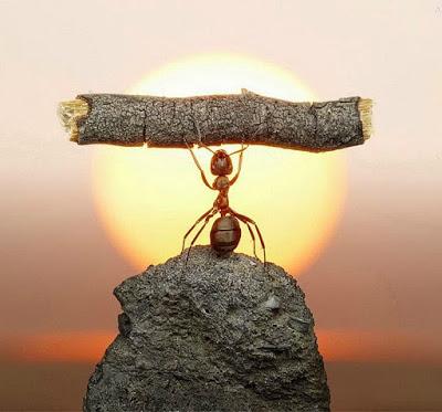 Αποτέλεσμα εικόνας για η υπομονη του μυρμηγκιου